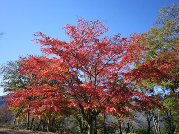 三峰神社のもみじ、紅葉