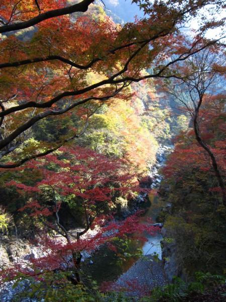 秩父市大滝にある紅葉の絶景