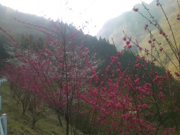 天然水が創られる山々に自生する花