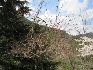 天然水が創られる山々の春