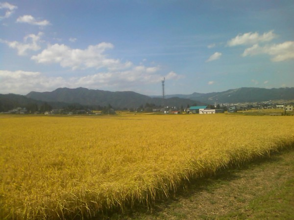 新潟県新米